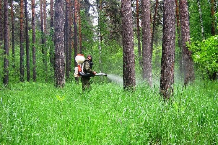 Обработка от клещей лесных массивов в Краснодаре